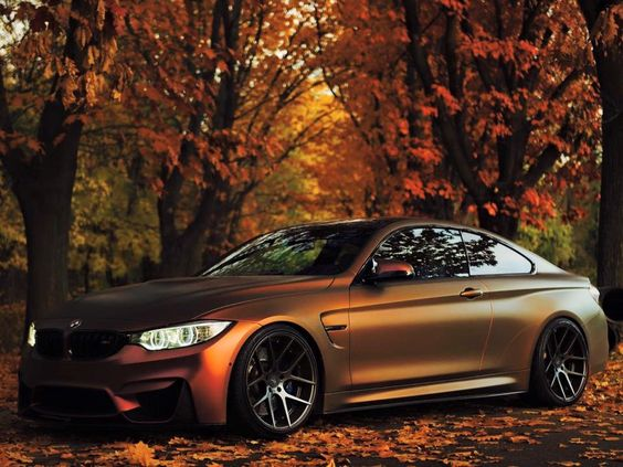 fall colors on bmw