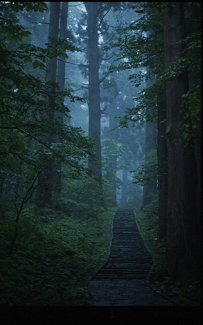 foggy path through the woods