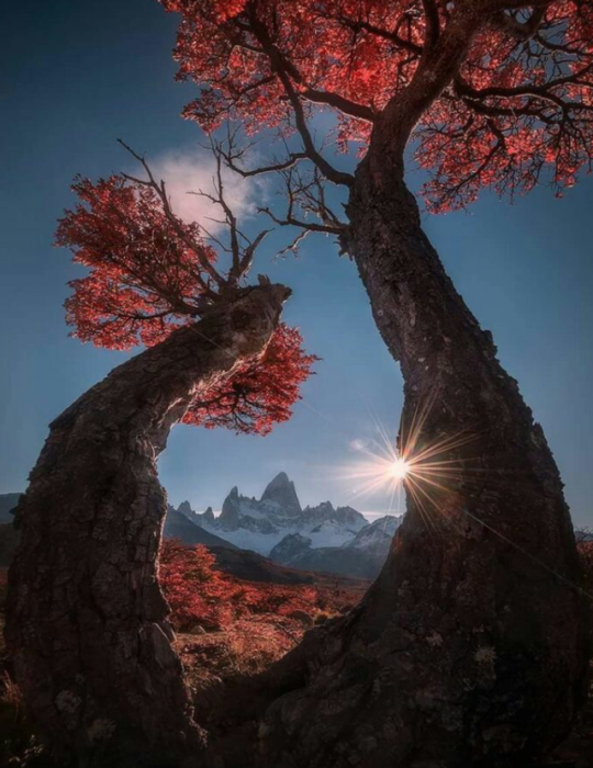 majestic trees in fall
