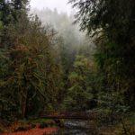 bridge over stream and mossy trees