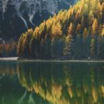 trees at fall near lake