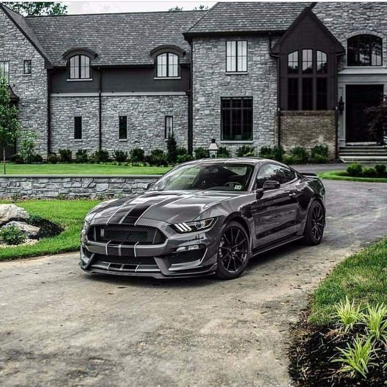 mustang in front of castle looking home
