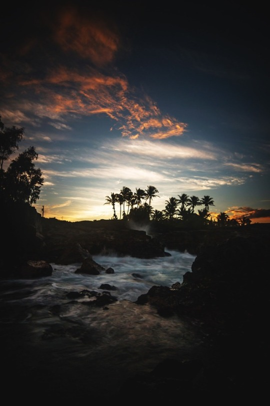 summer sunset with palm trees