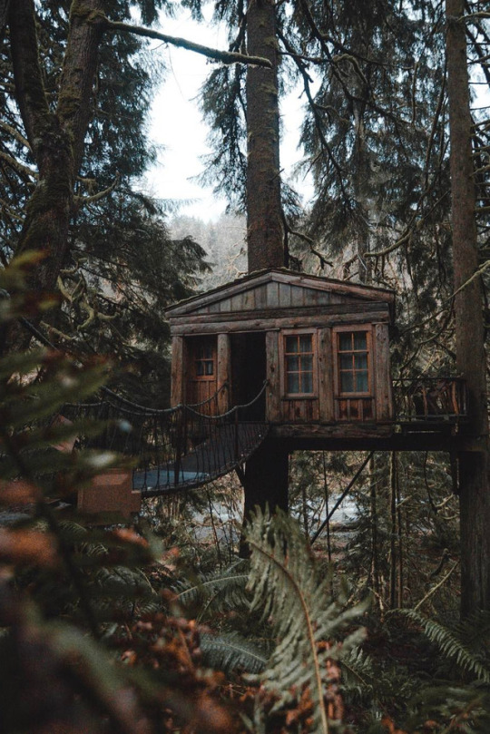 manly tree house