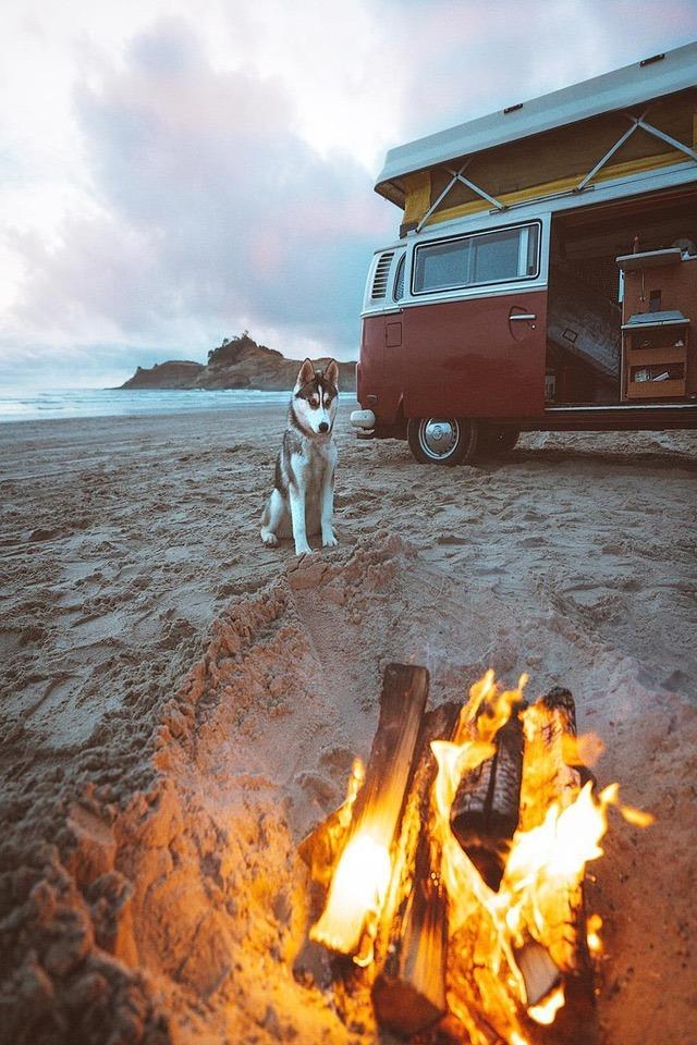 husky on beach near campfire