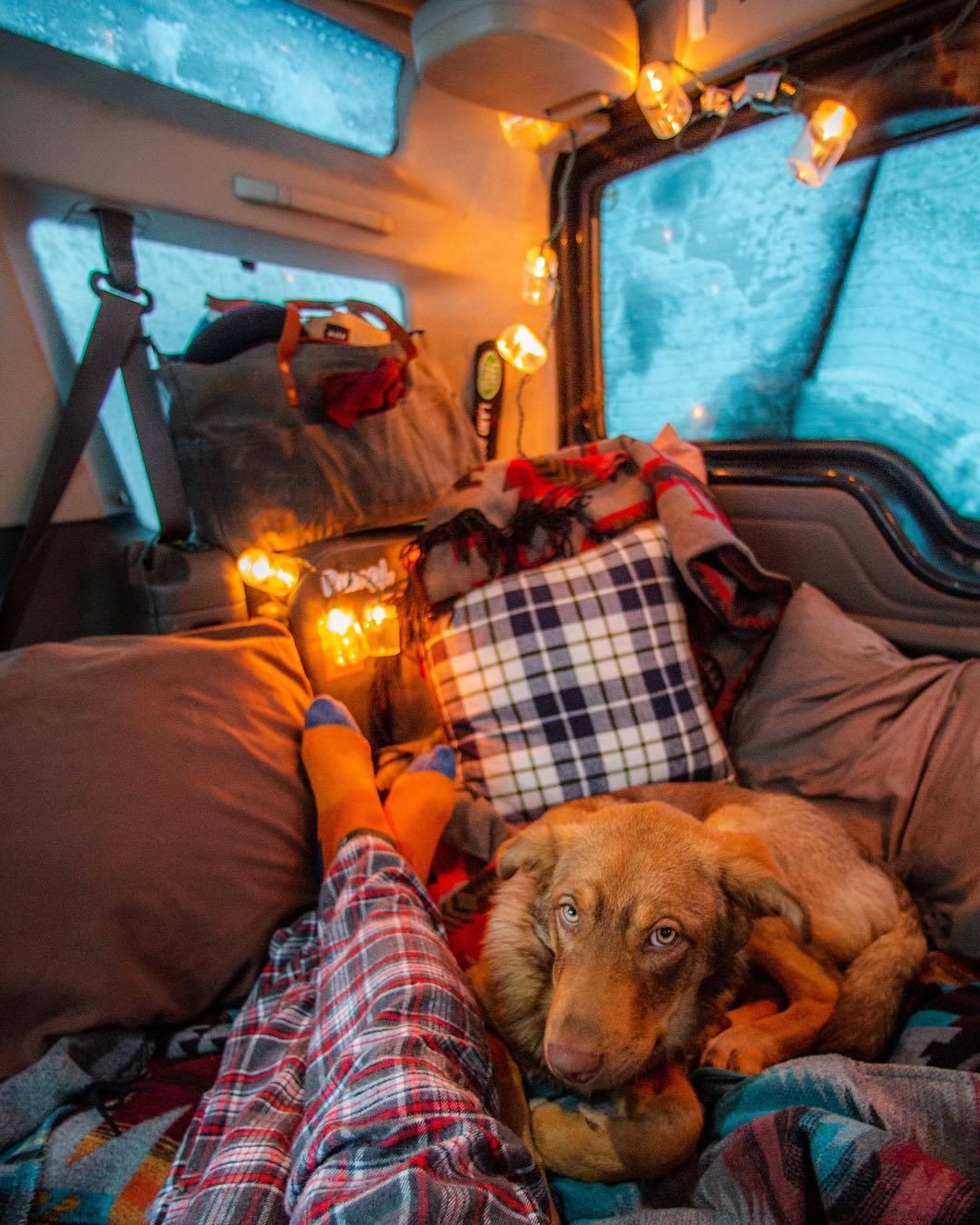 dog and man relaxing in camper van