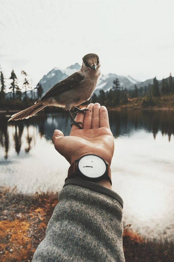 man with bird perched on hand