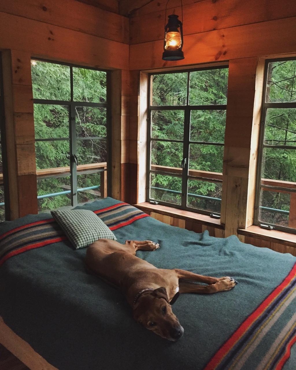 doggo relaxing
