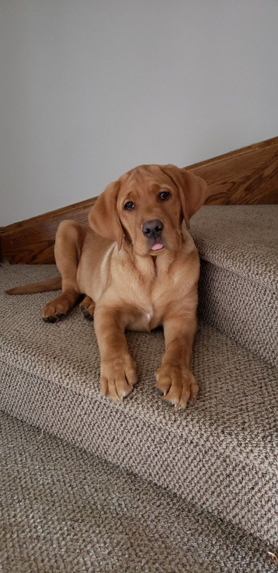 handsome puppy on stairs