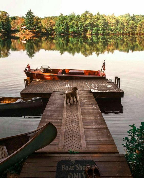 a puppy on boat dock