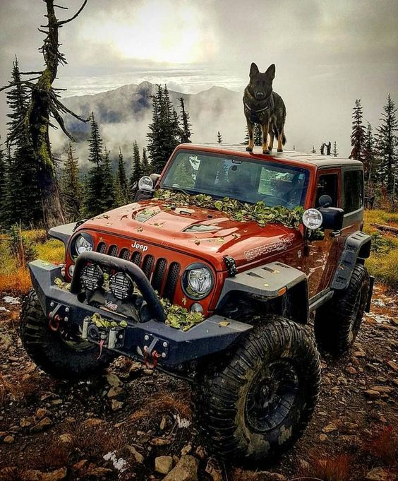 dog on top of jeep in the wilderness