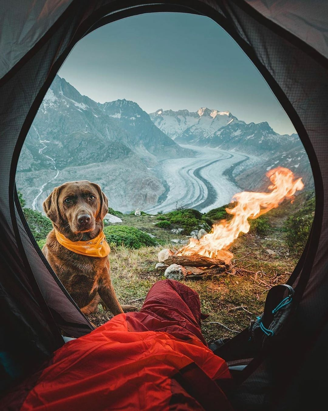 dog looking in tent with mountain scene behind him