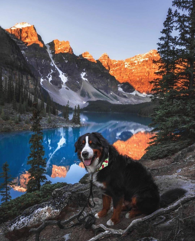 doggo next to mountain lake