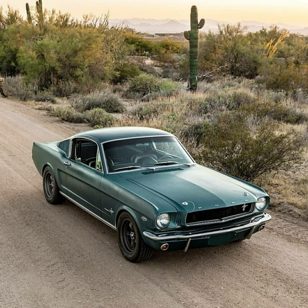 green for mustang in the desert