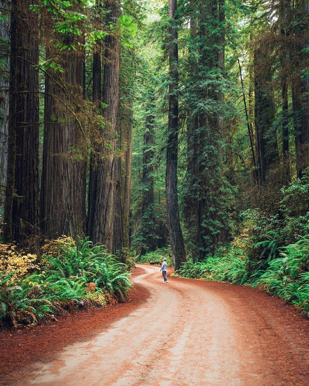 Redwood State Park
